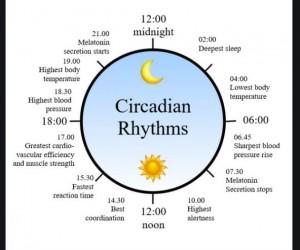 Circadian Rhythm 24hr Chart